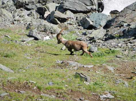 We spotted a pair of Ibex (deer) on our way to the cabin.